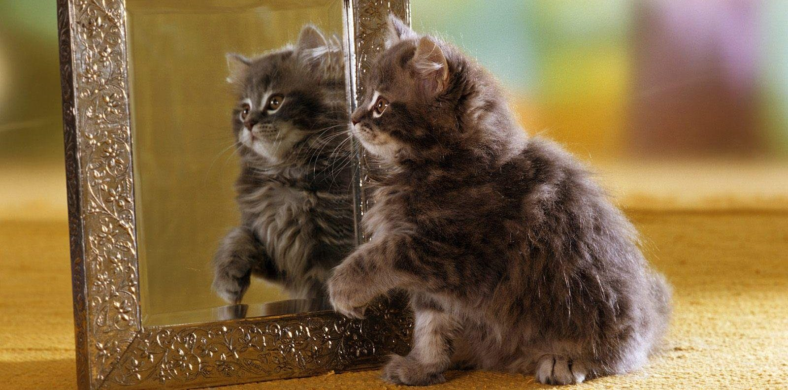 the_cat_and_the_mirror_wallpaper_47fa0